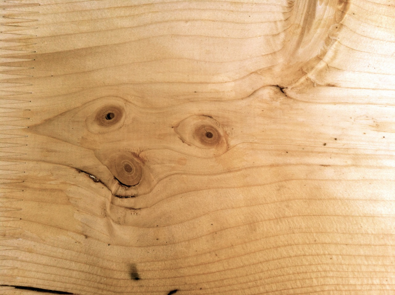 The faces of trees