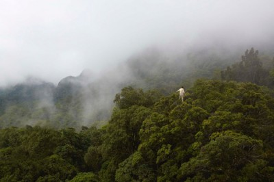 The Tree Walker –how to walk atop the rainforest