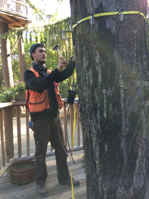 Arborist J. Casey Clapp from Tree Solutions, Seattle