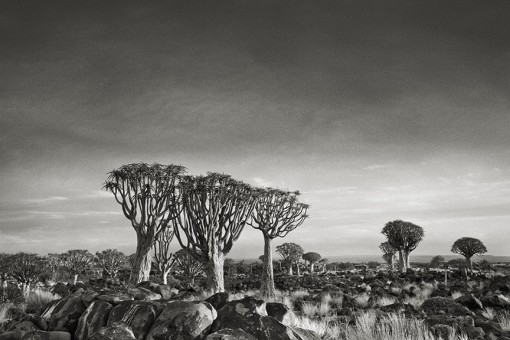 Beth Moon – Quiver Tree Forest