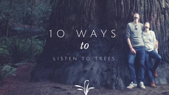 10 ways to listen to trees