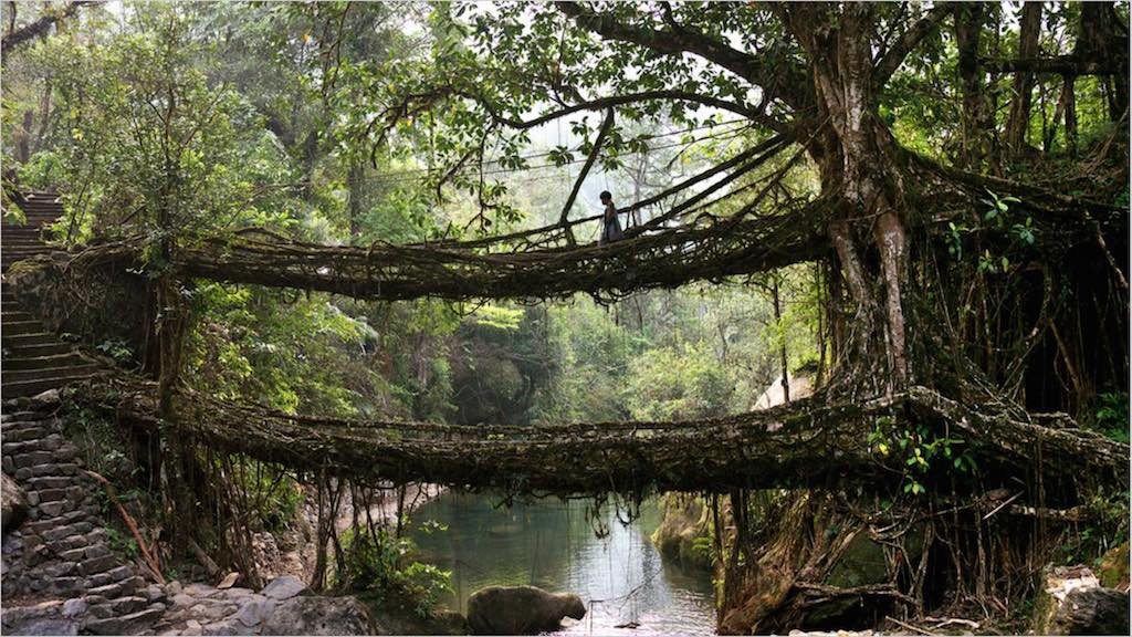 The living bridges of Meghalaya