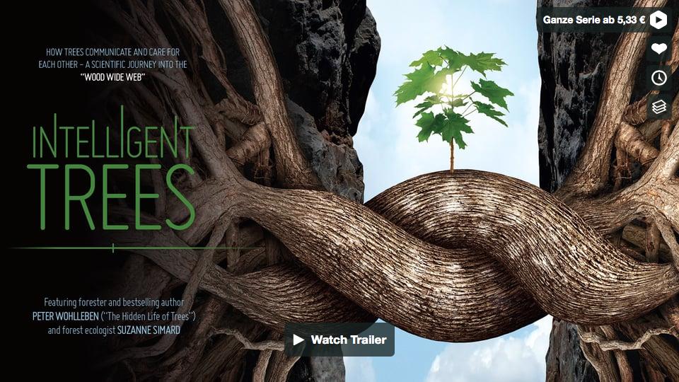 Already heard of the Wood Wide Web?